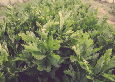Casa Scaparone - Organic Farm (10)