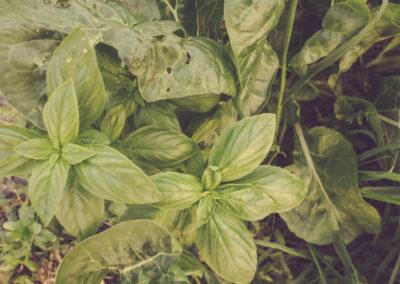 Casa Scaparone - Organic Farm (11)