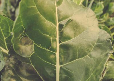 Casa Scaparone - Organic Farm (12)