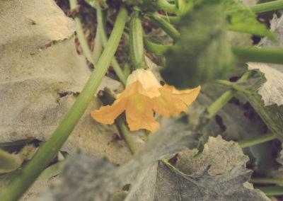 Casa Scaparone - Organic Farm (13)