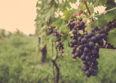 Casa Scaparone - Organic Farm (14)