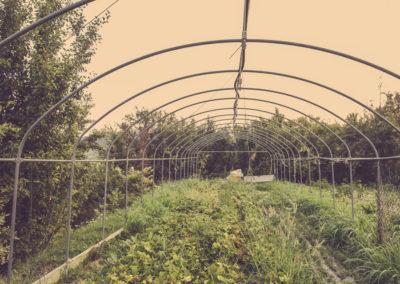 Casa Scaparone - Organic Farm (16)