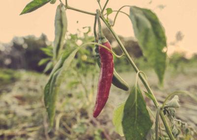 Casa Scaparone - Organic Farm (17)