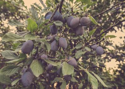 Casa Scaparone - Organic Farm (18)