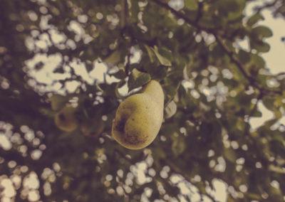 Casa Scaparone - Organic Farm (3)