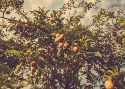 Casa Scaparone - Organic Farm (31)
