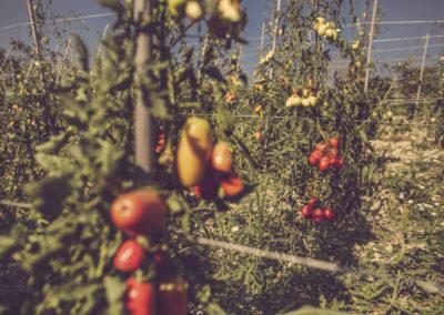 Casa Scaparone - Organic Farm (32)