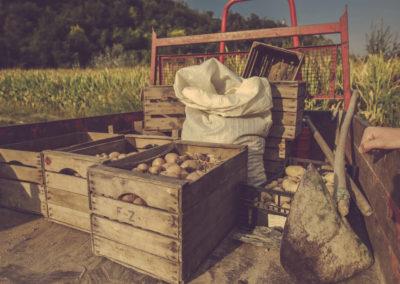Casa Scaparone - Organic Farm (36)