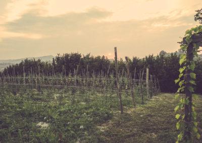 Casa Scaparone - Organic Farm (4)