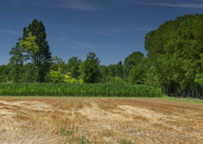 Casa Scaparone - Organic Farm (45)