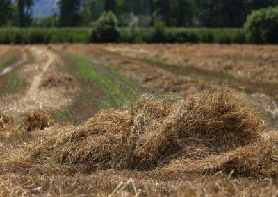 Casa Scaparone - Organic Farm (46)