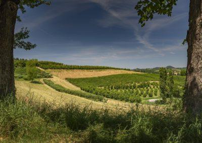 Casa Scaparone - Organic Farm (47)