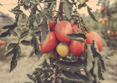 Casa Scaparone - Organic Farm (5)