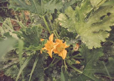 Casa Scaparone - Organic Farm (6)