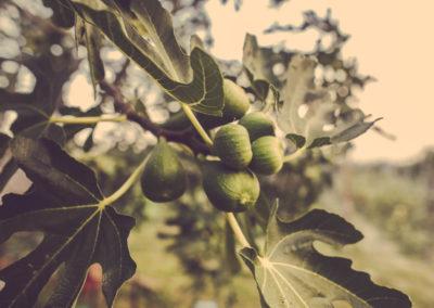Casa Scaparone - Organic Farm (7)