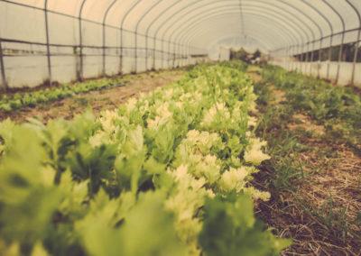 Casa Scaparone - Organic Farm (8)