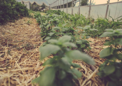 Casa Scaparone - Organic Farm (9)